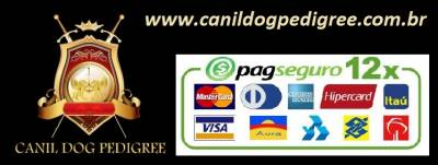 Canil dog pedigree